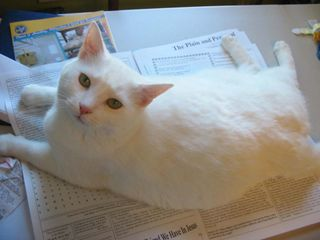 Boo on newspaper