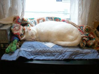 Winter day boo cat